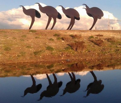Gerry McMahon, Flock of emus, ART LOGIC